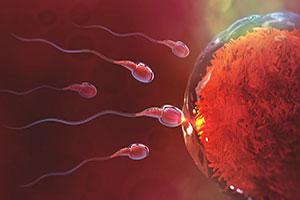 Fertility-Profile